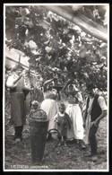 MERANO - INIZI 900 - LA VENDEMMIA CON BAMBINI - BELLA CARTOLINA FOTOGRAFICA - Vigne