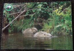 Beaver - Castor - Bever - Biber - Castoro - Animal - Animaux - Fauna - WWF Panda Logo - Autres