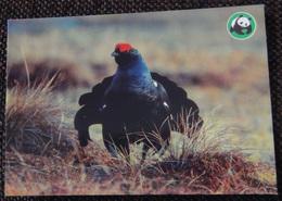 Bird - Oiseau - Vogel - Uccello - Pássaro - Black Grouse - WWF Panda Logo - Oiseaux