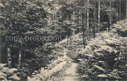 43505295 Herrenalb_Schwarzwald Panorama Weg Zur Aschenhuette - Germania