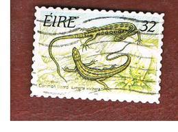 IRLANDA (IRELAND) - SG 970   - 1995  ANIMALS: ZOOTOCA VIVIPARA    - USED - 1949-... Repubblica D'Irlanda