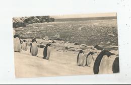 ILES FALKLAND 11 (PINGOUINS) - Falkland Islands