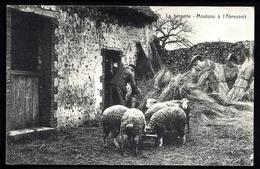 MOUT- CPA ANCIENNE FRANCE- LA BERGERIE- LES MOUTONS A L'ABREUVOIR- TRÈS GROS PLAN ANIMÉ- - Elevage