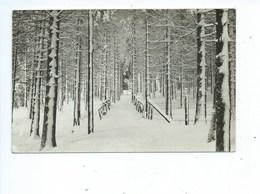 Elsenborn Photo Herld - Elsenborn (camp)