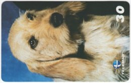 BRASIL H-330 Magnetic Telemar - Animal, Dog - Used - Brasilien