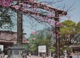 AL49 Yasukuni Shrine, Tokyo - Tokio