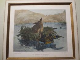 Lithographie Aquarellée - Fusains - Le Lapin Et La Sarcelle - Fables De Florian - J. Laurens D'après E. Villa - 1867 - - Lithographies