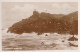 AP38 Lantern Hill, Ilfracombe - RPPC, Gulls - Ilfracombe