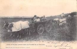 40 Landes - Attelage Landais Dans Les Plaines De La Chalosse  (- Cpa DOS SIMPLE Année 1904)* PRIX FIXE - France