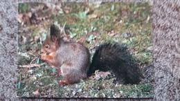 CPM L ECUREUIL SQUIRREL EICHHORNCHEN  IMAGES DE CHEZ NOUS CLICHE S MARMOUNIER ED EDY - Animals