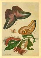 Animaux - Papillons - Caligo Idomeneus From Maria Sibylle Merian's - Metamorphis Insectorum Surinamensium 1730 - By Cour - Papillons