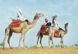 SAHARA ESPAGNOL   :  Méharistes . Carte Editions Porcelaines Le Tallec .  Oblitération Villa Cisneros - Western Sahara