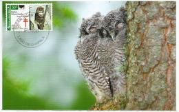 Chouette Tachetée, Spotted Owl, Cárabo Californiano, Carte-maximum Mexique - Mexico