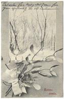 Bonne Année - Postmark 1904 - A S W - Snowy Wood & Mistletoe New Year - Du Gui - New Year
