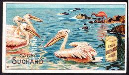 CHROMO Chocolat SUCHARD Animaux  Pelican   Animals   Serie 142 - Suchard