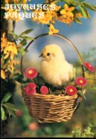 Joyeuses Pâques - Pâques