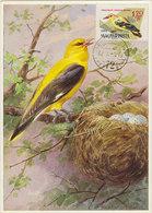 HUNGARY 1961 Max Card With Bird.BARGAIN. - Non Classés