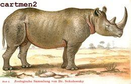 ZOOLOGISCHE SAMMLUNG VON DR. SOKOLOWSKY ZÜRICH ZOOLOGIE RHINOCEROS ZWEILHÖRNIGES ILLUSTRATEUR ANIMAUX ZOO PHOTOGLOB - Rhinocéros