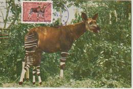 Zaire Carte Maximum Animaux 1976 Okapis 855 - Autres