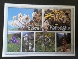 LES PYRÉNÉES,  Flore De Montagne, Eddelweiss ,Sedum, Iris, Linaigrette, Eryngium, Digitale, 2010 TB - Giftige Pflanzen