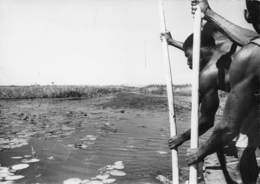 ZAMBEZE - Rameurs Sur Le Fleuve - Zambie
