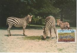 Rwanda Carte Maximum Animaux 1965 Zèbres 99 - Autres