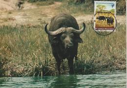Rwanda Carte Maximum Animaux 1965 Buffles 102 - Rwanda