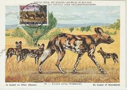 Rwanda Carte Maximum Animaux 1965 Lycaons 103 - Rwanda