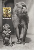 Rwanda Carte Maximum Animaux 1965 Cynocéphales 104 - Rwanda