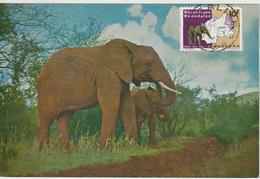 Rwanda Carte Maximum Animaux 1965 Eléphants 105 - Autres
