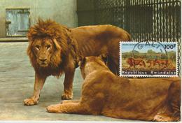 Rwanda Carte Maximum Animaux 1965 Lions 107 - Autres