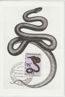 Rwanda Carte Maximum Serpents 1967 Dasypeltis 198 - Rwanda