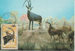 Rwanda Carte Maximum Antilopes 1975 Antilope Rouanne 613 - Rwanda