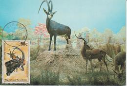 Rwanda Carte Maximum Antilopes 1975 Antilope Rouanne 613 - Autres