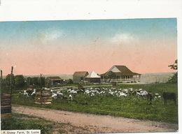 A Sheep Farm  St Lucia .  Clarke  Sent To Mélédo Sage Femme Langonnet Morbihan - Sainte-Lucie