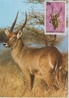Rwanda Carte Maximum Antilopes 1975 Waterbuck 617 - Autres