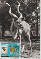 Rwanda Carte Maximum Antilopes 1978 Antilope Kudu PA13 - Rwanda
