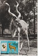 Rwanda Carte Maximum Antilopes 1978 Antilope Kudu PA13 - Autres