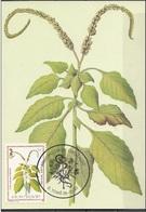 718 S. Tomé E Principe 1983 Medicinal Plants Maximum Card Hiliotropium Indicum Piante Medicinali Maxi - Sao Tomé E Principe