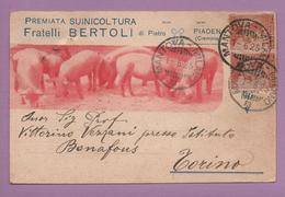 Premiata Suinicoltura Fratelli Bertoli Di Pietro, Piadena (Cremona) - Cremona