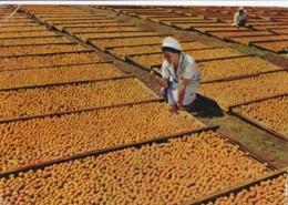BOTSWANA  BECHUANALAND  :  Carte Editions Porcelaines Le Tallec  :  Séchage D'abricots - Botswana