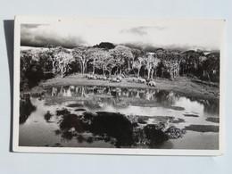 C.P.A. : KENYA : From TREETOPS, NYERI, Stamp In 1965 - Kenya