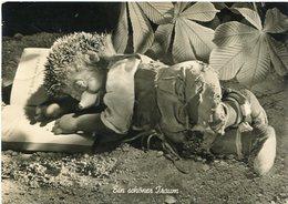 """""""EIN SCHONER TRAUM"""" MECKI FROM THE FILM """"HOR ZU!"""" DIEHL POSTAL CIRCULATED 1958  HEDGEHOG PUPPET - LILHU - Mecki"""