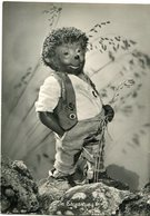 """IN ERWARTUNG!"" MECKI FROM THE FILM ""HOR ZU!"" DIEHL POSTAL CIRCULATED 1958  HEDGEHOG PUPPET - LILHU - Mecki"