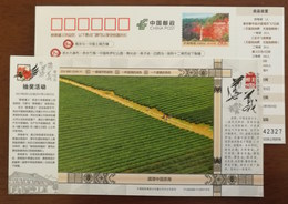 Meitan,sea Of Tea Field,China 2017 Beautiful Zunyi Landscape Advertising Pre-stamped Card - Drinks