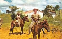 Brésil - Dans La Plupart Des Régions, Le Cheval Et Le Mulet Sont Encore Les Moyens De Transport Les Plus Utilisés - Andere