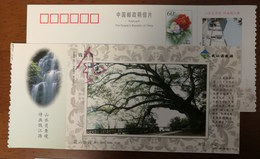 Huashan Park Ancient Camphor Tree,waterfall,China 2002 Kaihua Headstream Of Qianjiang River Tourism Pre-stamped Card - Other