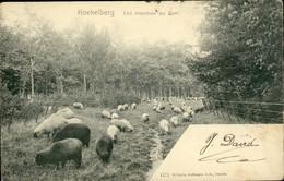 KOEKELBERG :  Les Moutons Au Parc - Koekelberg