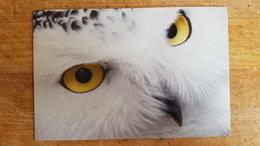 BIRD Owl -   Modern Postcard - Oiseaux