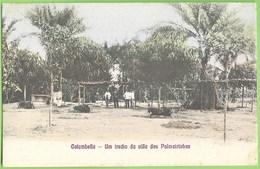Cotumbela - Um Trecho Da Vila Das Palmeirinhas - Angola - Angola